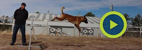 dog training services Elizabeth, Colorado
