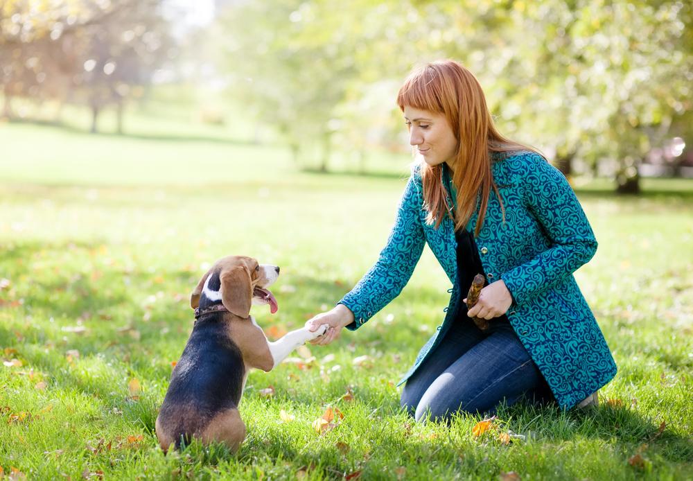 Dog obedience training woodland park