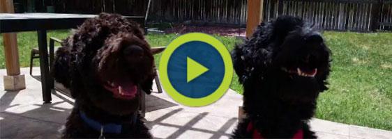 dog training news video colorado
