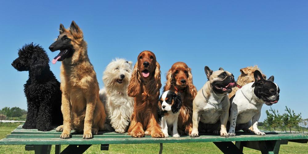 dog-trainer-parker-colorado-5a2576b53f00a