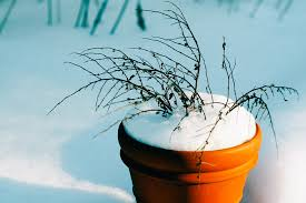 winter-plant-pot-protection-landscaping-calgary-5bf6c5d8c30ea