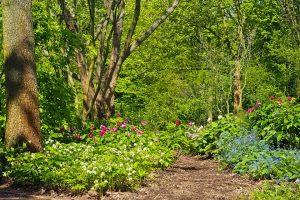 landscaping-tips-calgary-spring-5ca646dc5e989