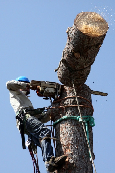arborist cutting down a tree with a chainsaw