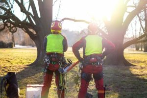 Two arborists looking at a tree/