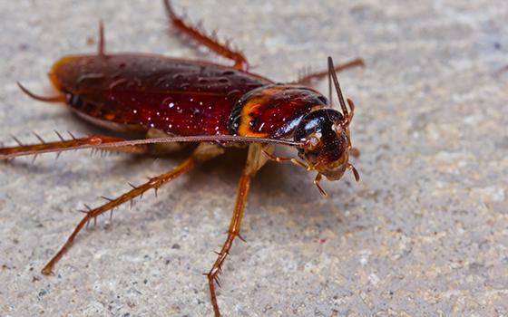 cockroachespic