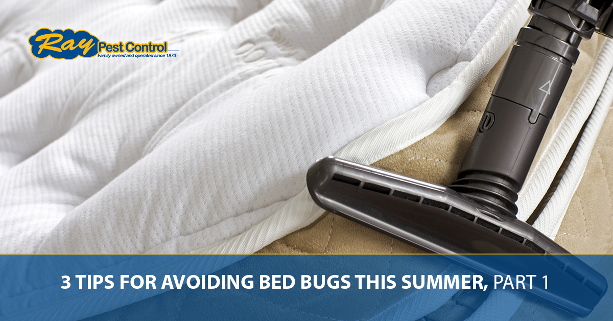 Bed Bug Removal Piedmont Tips For Avoiding Bed Bugs This Summer Part 1