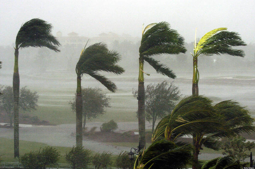 Hurricane-Trees-landscaping