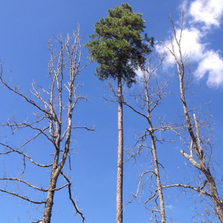 tree_pic