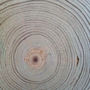 tree_pic2