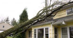 Roof Damage Caused By Tree