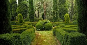 A garden of manicured hedges and shrubs. Photo by Michael on Unsplash