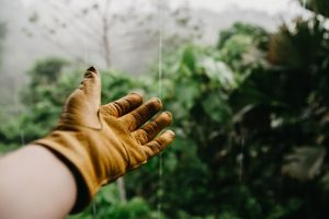 An outstretched hand clothed with a garden glove offers a supportive gesture. Photo by Vince Fleming on Unsplash.
