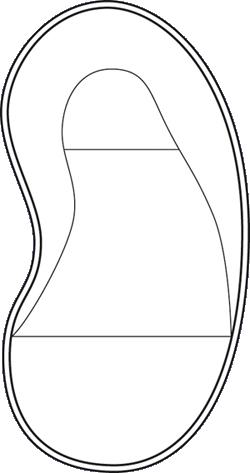 kidney-large