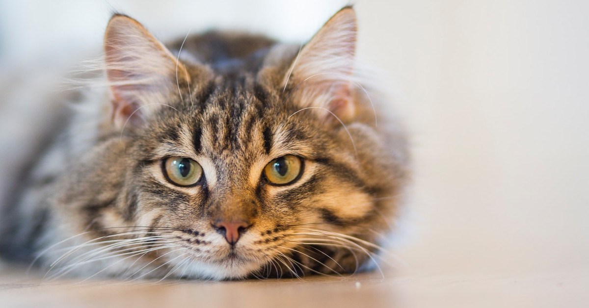 helping your cat adjust to apartment life summit riverside apartments littleton