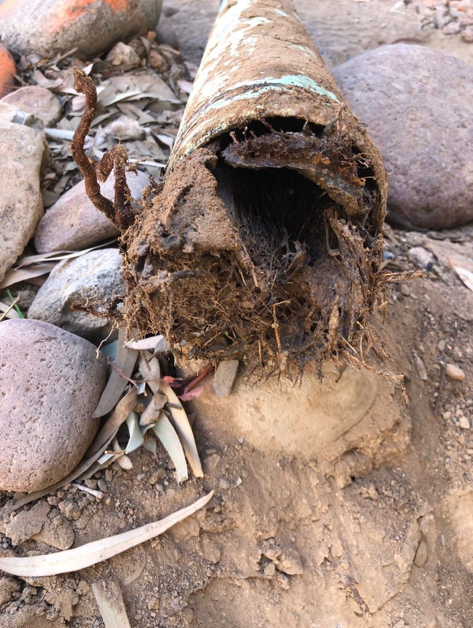 "Cover image of roots in a pipe for blog ""Root Intrusions AKA the Super Villain"""
