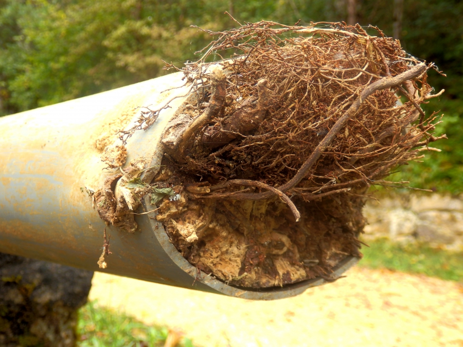 Roots in a pipe