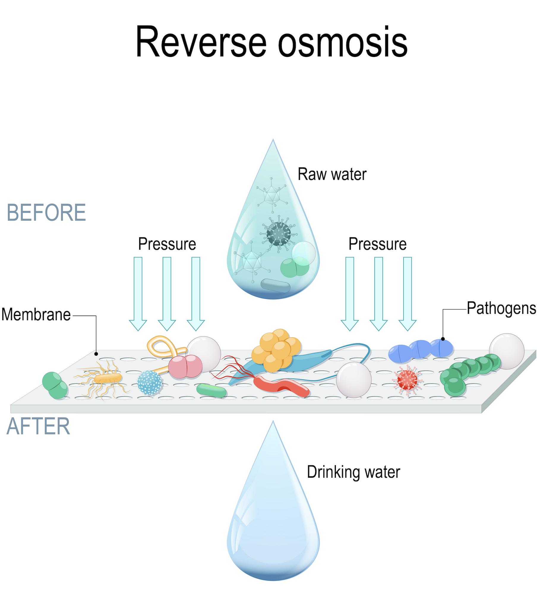 demonstration of osmosis