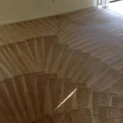 steam cleaning carpet cleaning service used in detail orientated pattern