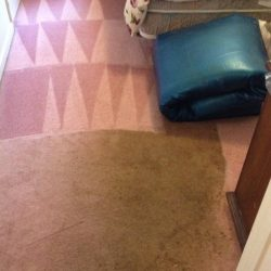 cleaned carpet vs. uncleaned carpet for comparison