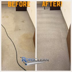 Treated yellowing carpet recovers original color in before and after
