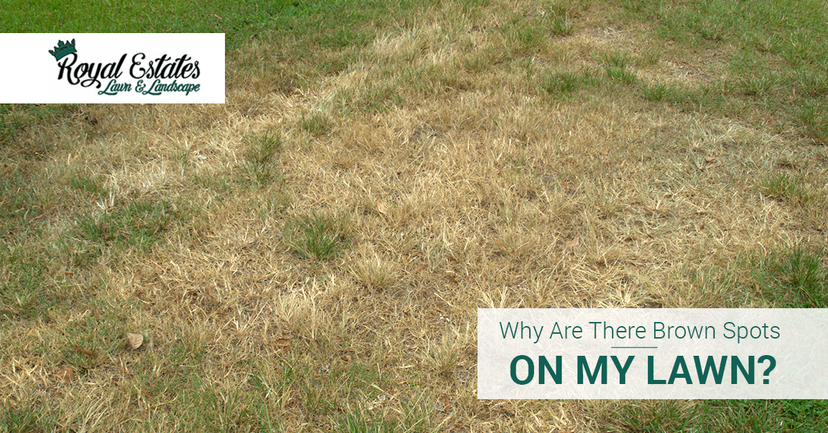 Why Are There Brown Spots On My Lawn? | Royal Estates Lawn