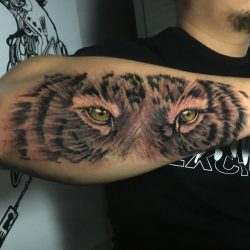 Black and gray tattoo of a tiger portrait with green eyes on the right forearm.