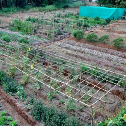 Participate in organic gardening at our Ayurvedic spa.