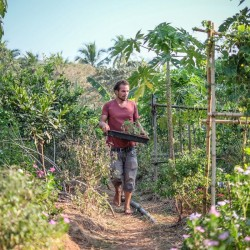 Enjoy the benefits of organic gardening at our Ayurvedic spa.