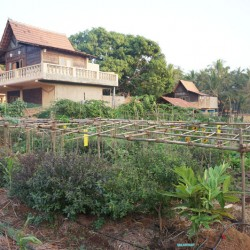Reconnect with the earth in the organic garden at our yoga retreat in India.