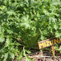 Learn about organic gardening at our yoga vacation camp.