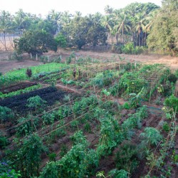 Soak up the vitality of the organic garden at our yoga retreat center. Learn more today!