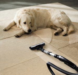 dog-on-carpeted-rug
