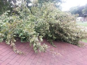 Wind can cause trees to fall.