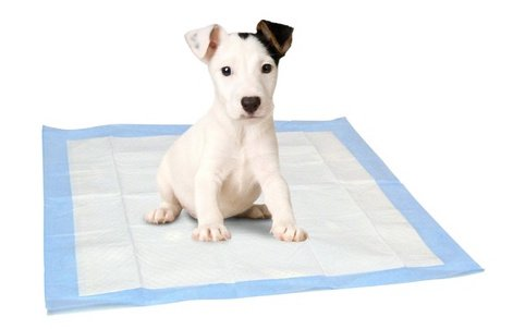Why To Avoid Pee Pads Other House Breaking Tips Sarasota Dog Wizard