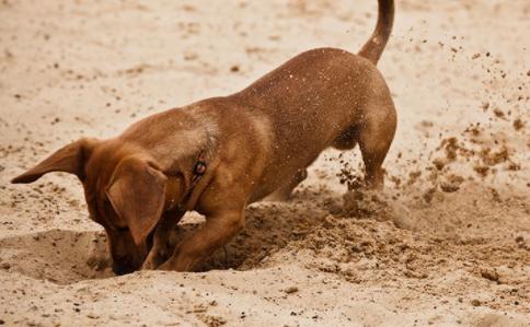 dog burying bone