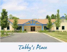 tabbys
