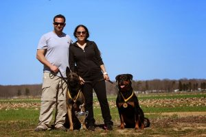 Rottweiler Breeders Deer Park | Rottweiler Pups For Sale NY