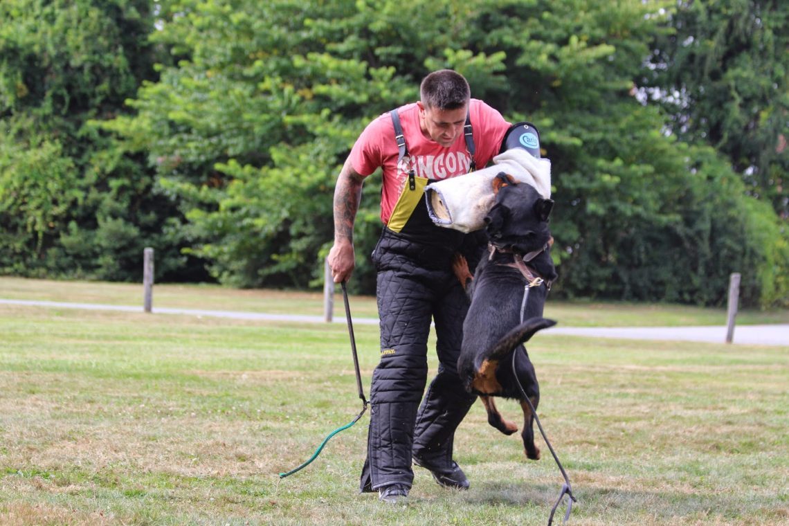 Rottweiler Puppies Deer Park | Intelligent Dogs NY | Rottie