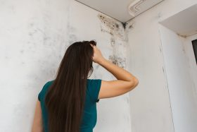 facts about mold
