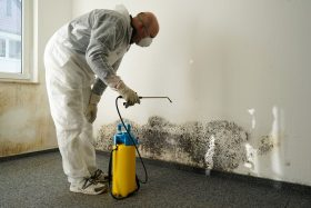 Getting Rid of Mold