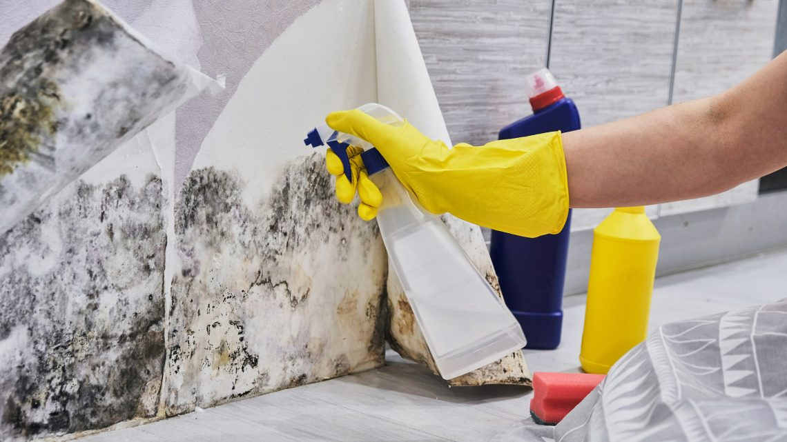 What Does Mold Need to Grow