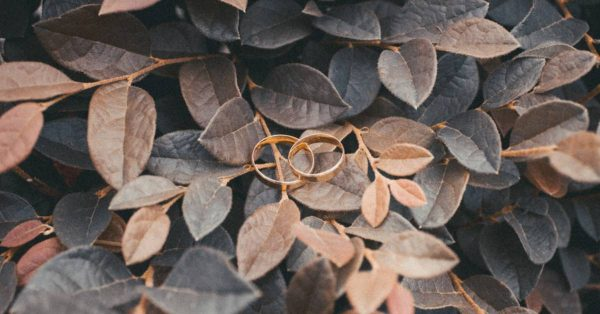 an image of wedding rings sitting in a pile of leaves
