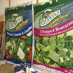 Custom wall murals for River Ranch veggies