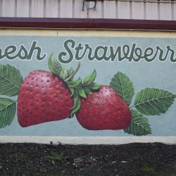 Unique mural for fresh strawberries from our custom sign makers