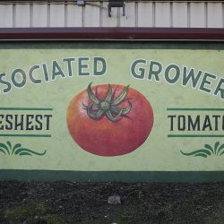 Custom painted mural for Associated Growers