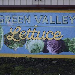 Green Valley Lettuce custom painted mural