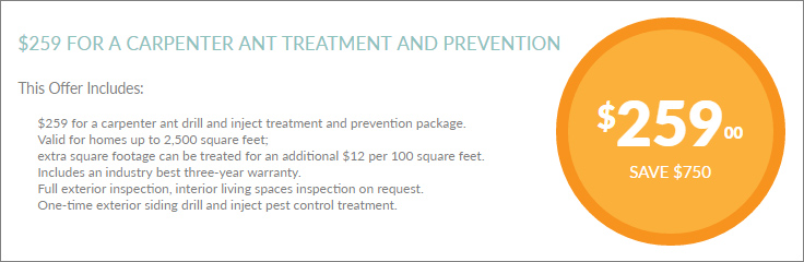 Ant-Treatment-Coupon-01