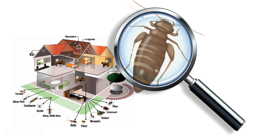Pest Inspection Services in Sherwood