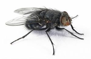 fly-id