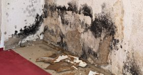mold removal chula vista
